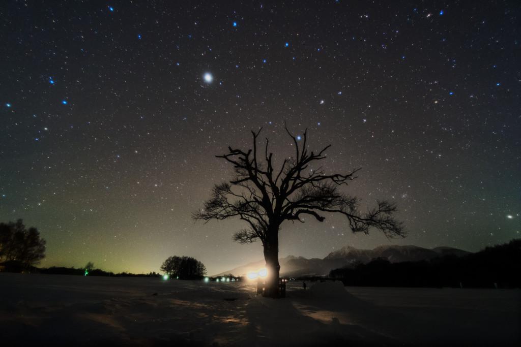しし座とやまなしの木